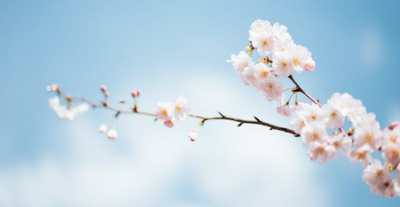 Spring has Sprung!  Getting your rental property ready for the new season.